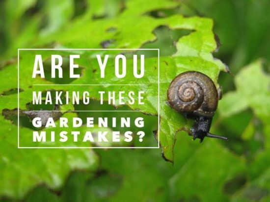 are you making these gardening mistakes?