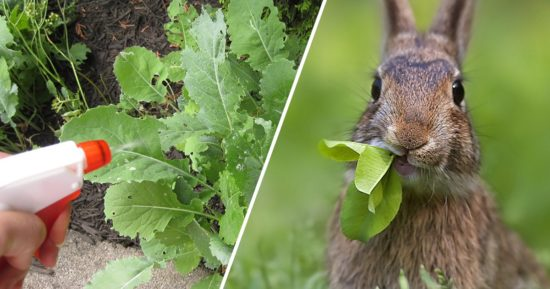 keep rabbits out of garden - How To Keep Rabbits Out Of Garden