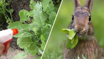 How to Keep Rabbits Out of the Garden - Gardening Channel