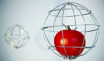 6 Ways to Build Your Own Tomato Cages