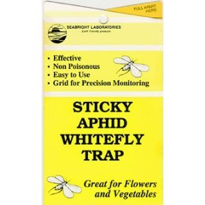 Aphid stick traps