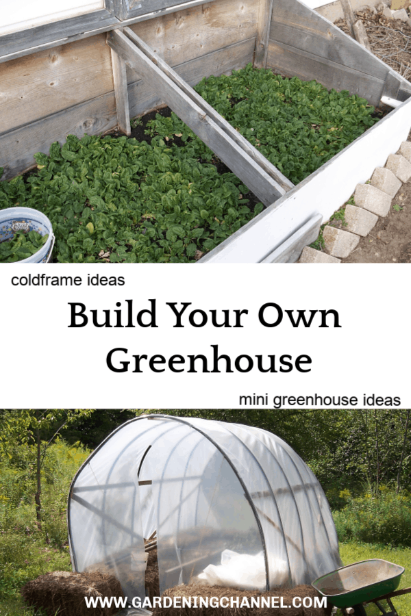 coldrame with spinach and small greenhouse with text overlay build your own greenhouse coldframe ideas mini greenhouse ideas