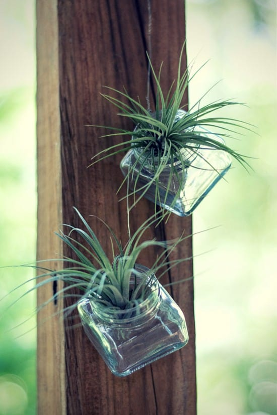 How to Grow Air Plants - Gardening Channel