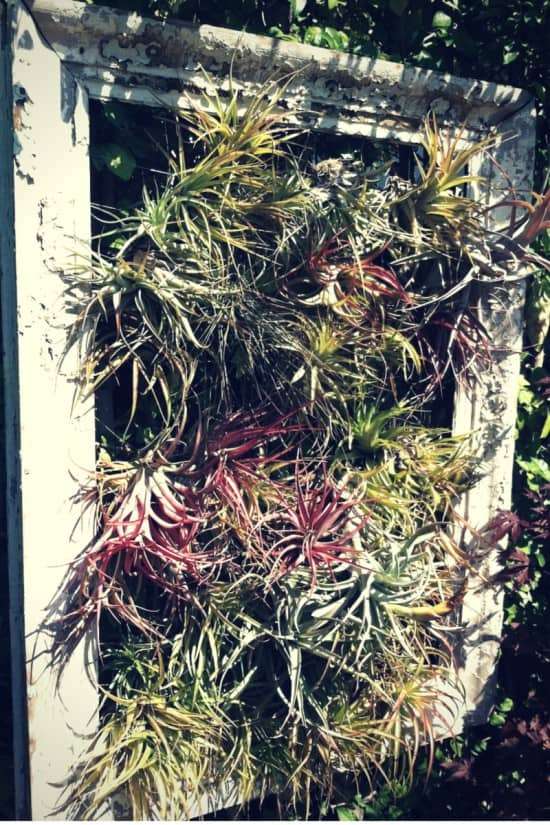 Air plant window