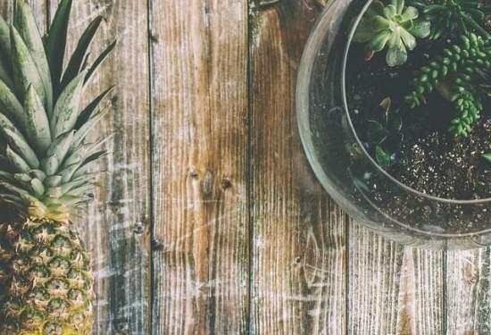 growing pineapple indoors