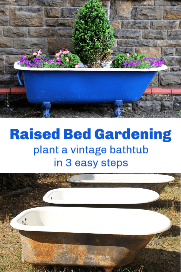 Planted Old Tub Old Cast Iron Tubs With Text Overlay Raised Bed Gardening  Plant A Vintage