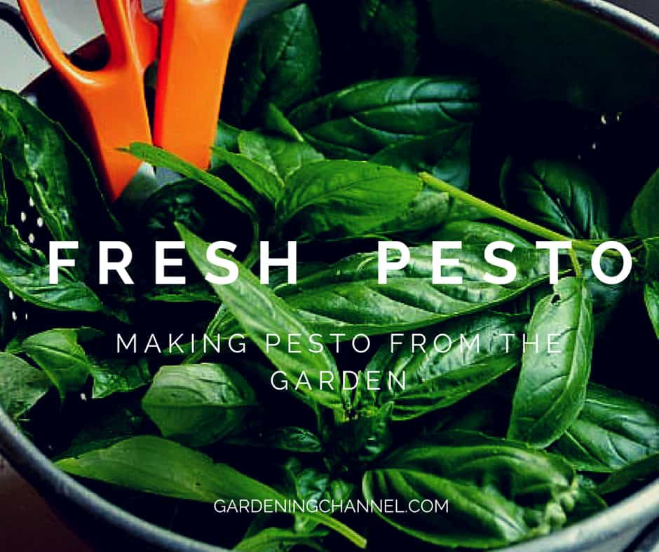 The Complete Guide to Making Fresh Garden Pesto