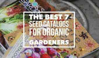7 Best Seed Catalogs for Organic Gardeners