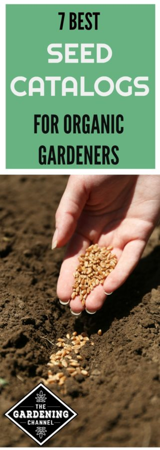 Best seed catalogs for organic gardeners