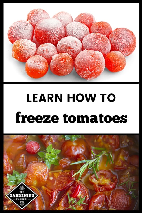 frozen tomatoes and stewed tomatoes with text overlay learn how to freeze tomatoes