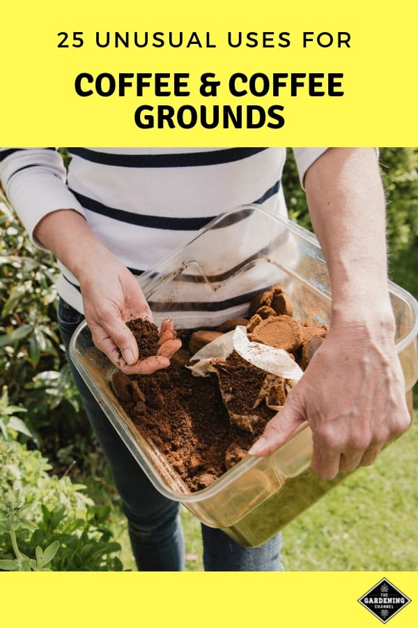 coffee grounds used in garden with text overlay twenty five unusal uses for coffee grounds
