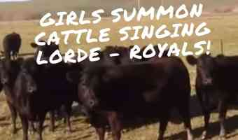 Girls Inspired by Trombone Video Summon Cattle Herd By Humming (Lorde – Royals)