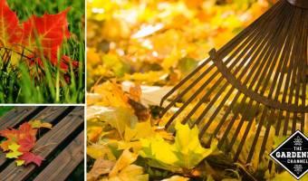 don't rake fall leaves