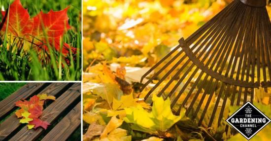 Reasons not to rake leaves