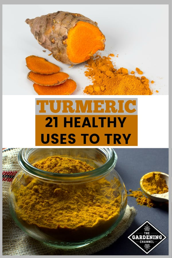 turmeric root and turmeric powder with text overlay turmeric 21 healthy uses to try
