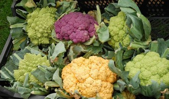 Branch out from Broccoli: How to Grow Broccoflower and Romanesco