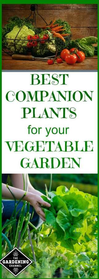 Best companion plants