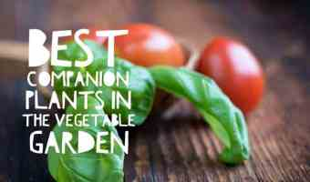 The Best Companion Plants for your Vegetable Garden