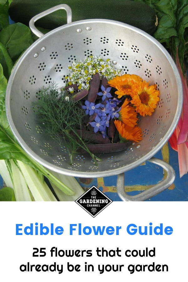 garden harvest with edilble flowers with text overlay edible flower guide twenty five flowers that could already be growing in your garden