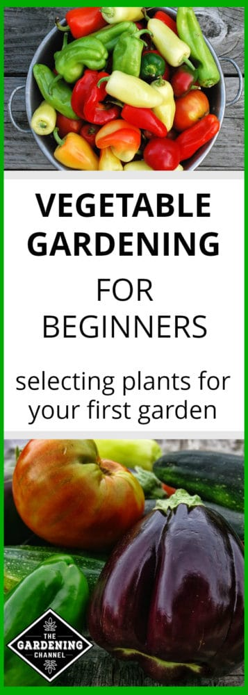 pepper harvest in colander and close up of vegetable garden harvest on table with text overlay vegetable gardening for beginners selecting plants for your first vegetable garden