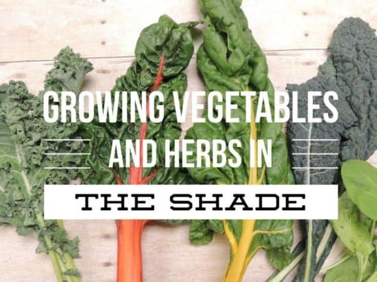 Growing a Garden in the Shade