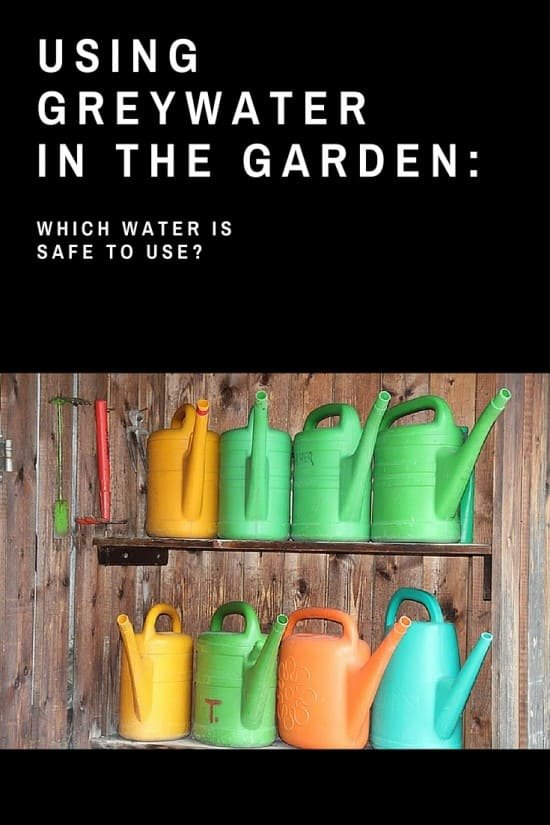 Using Greywater and Dishwater in the Garden