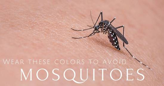 Colors That Attract Mosquitoes