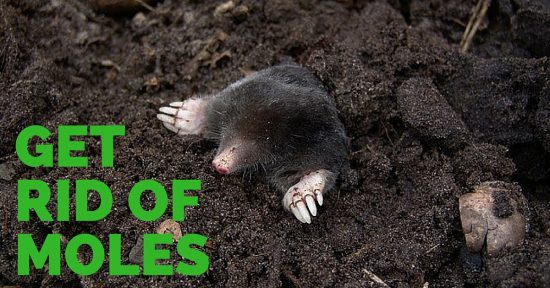 Get Rid of Moles in the Garden