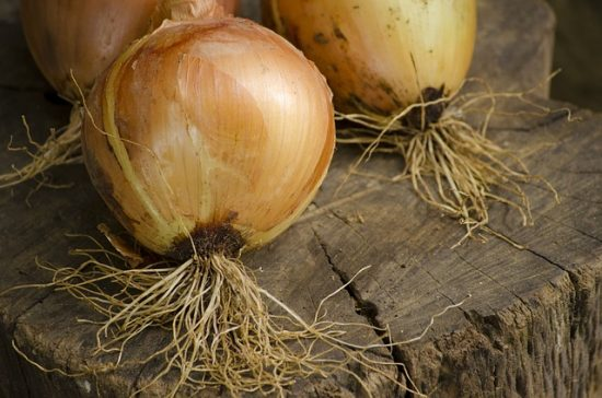 Drying Homegrown Onions for Storage