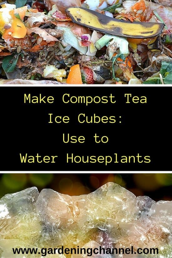 How to Make Compost Tea and Water Houseplants
