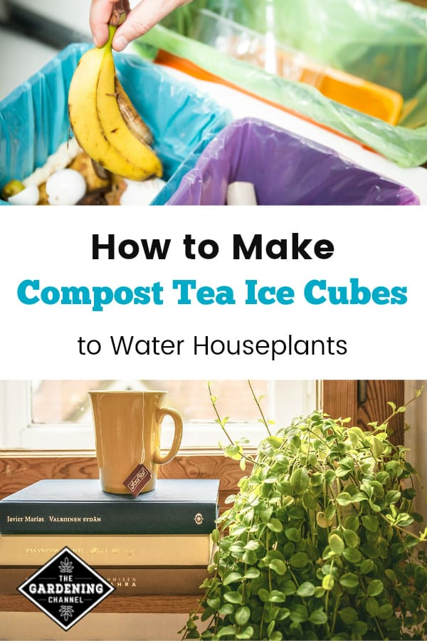 compost collection in kitchen and houseplant in window with text overlay how to make compost tea ice cubes to water houseplants