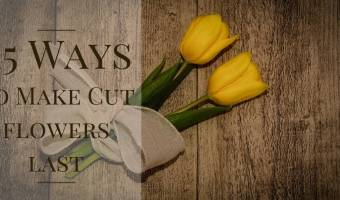15 Ways to Make Cut Flowers Last Without Chemicals
