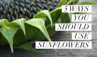 5 Uses for Sunflowers You May Not Have Considered