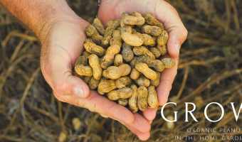 7 Gardening Tips for Growing Organic Peanuts