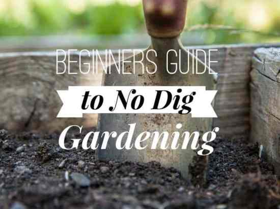 guide to no dig gardening