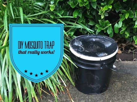 Diy Mosquito Trap With A 3 Or 5 Gallon Bucket Gardening Channel