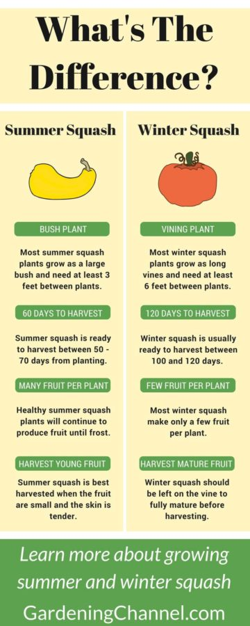 What's the difference between summer and winter squash? Learn what they have in common, and what's different.