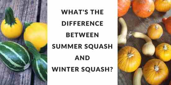 What's the difference between summer and winter squash, anyway?