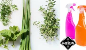 Germ Fighting Herb Garden