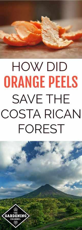 How orange peels saved Costa Rica