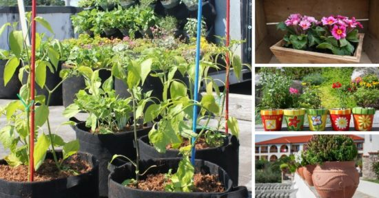 gardening container choices