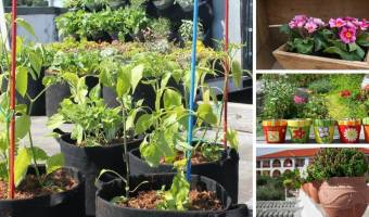 How to Choose the Best Container Type for Your Garden