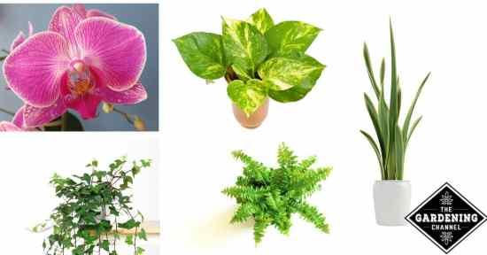 Houseplants for low light