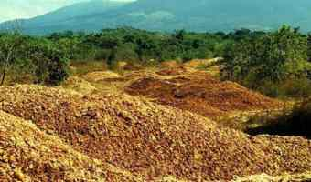 Power of composting – How orange peels revived a Costa Rican forest