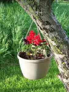 plastic pot hanging