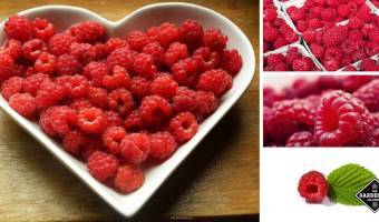 New Studies Show More Health Benefits of Raspberries