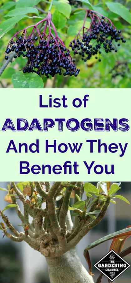Adaptogens and how they benefit you