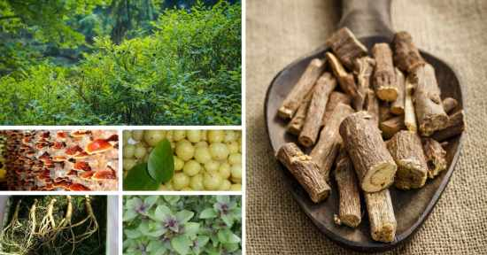List of Adaptogens, and What These Adaptogenic Herbs Can Do For You