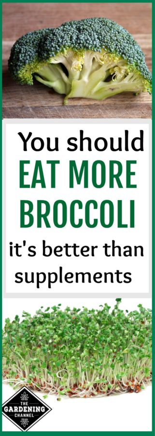 Why you should eat more broccoli