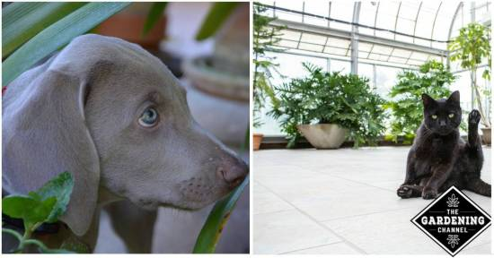 Indoor plants and pets